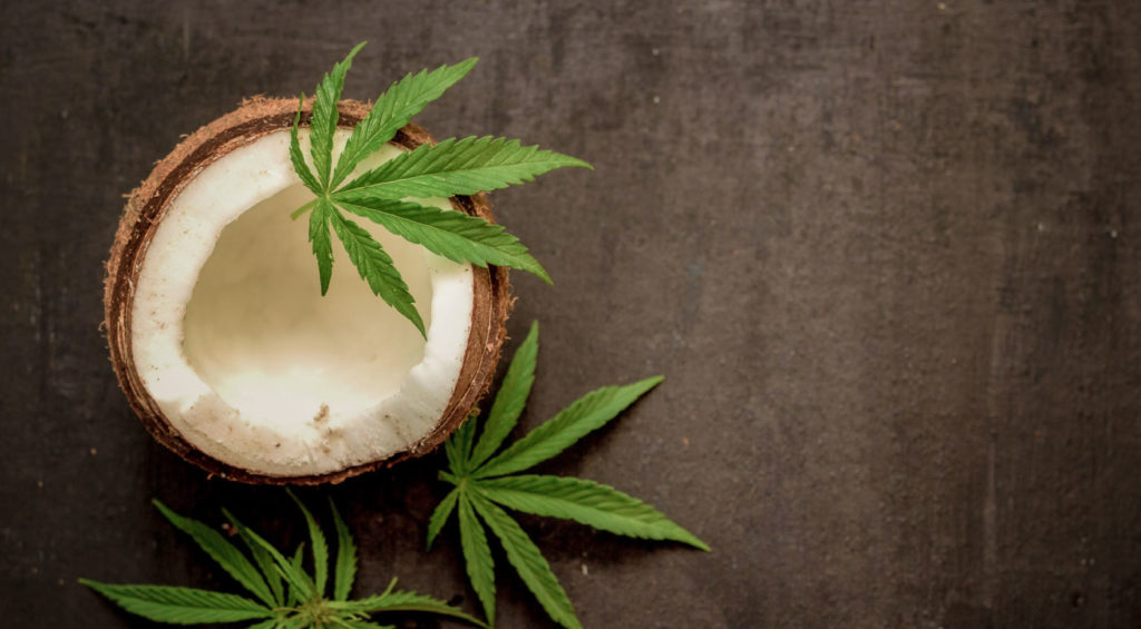 Best CBD Coconut Oils