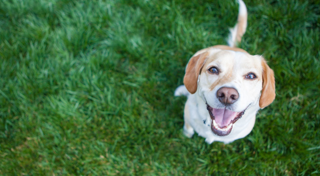 pet relief cbd oil for dogs