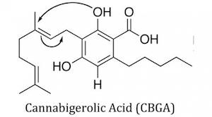 Cannabigerol Acid